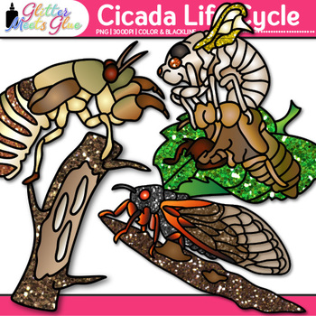 Cicada Life Cycle Clip Art {Great for Animal Groups, Insect, & Bug Resources}