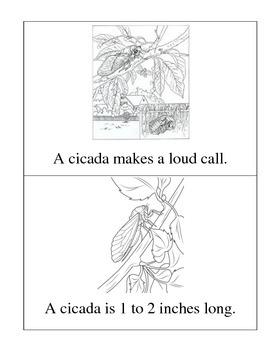Cicadas Reader