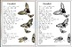Cicadas- Single Original Poem- BW,COLOR, BLANK, and JOURNAL!