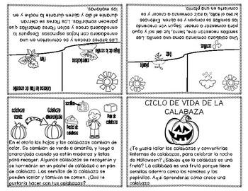 Ciclo de Vida de la Calabaza - In Spanish
