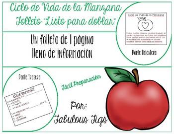 Ciclo de Vida de la Manzana - In Spanish
