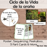 Ciclo de la vida de la araña Spider Life Cycle Pack Montessori Zoology Spanish