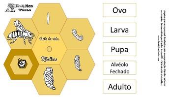 Ciclo de vida das abelhas (Bee life cycle in portuguese)