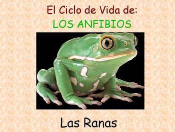 Ciclo de vida de la rana- Life cycle: Toads