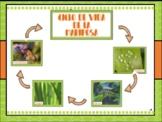 Ciclo de vida de las mariposas / ¿Que son los insectos? Tarjetas Educativas