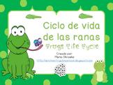 Ciclo de vida de las ranas ~ Frogs Life Cycle