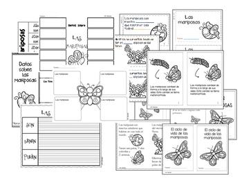 Ciclos de vida - Las mariposas