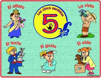 Cinco sentidos Five Senses (ciencias)