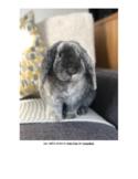 Circle Time Activities Bunny Rabbit