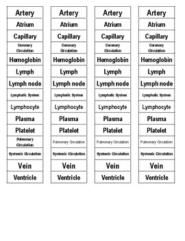 Circulation (Circulatory and Lymphatic System) Cut-n-Paste Vocabulary