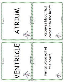 Circulation Vocabulary Cards