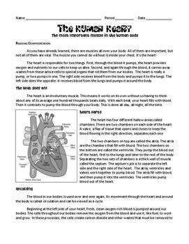Circulation & The Human Heart