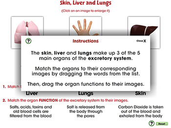Circulatory,Digestive,Reproductive Systems: Skin, Liver and Lungs - MAC Gr. 3-8