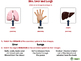 Circulatory,Digestive,Reproductive Systems: Skin, Liver and Lungs NOTEBOOK Gr3-8