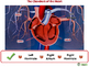Circulatory,Digestive,Reproductive: The Chambers of the Heart - NOTEBOOK Gr. 3-8