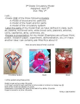 Circulatory Model Project