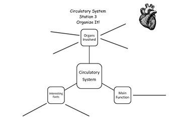 Circulatory Organizational Activity