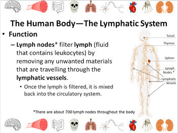 Human Body: Circulatory, Respiratory, Lymphatic, and Immune Systems Powerpoint