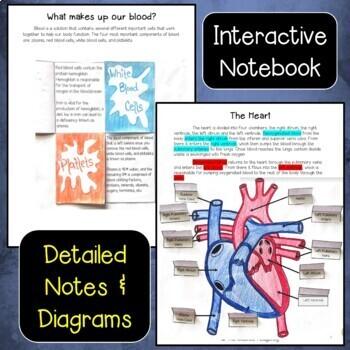 Circulatory and Respiratory Unit Bundle