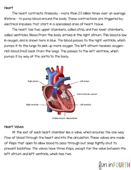 Circulatory System Informational Article