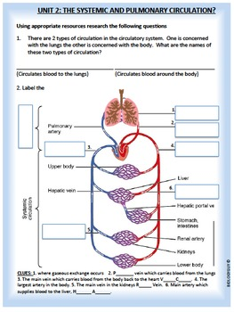 Circulatory System, Activity Packet and Worksheets
