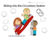 Circulatory System Activity Unit