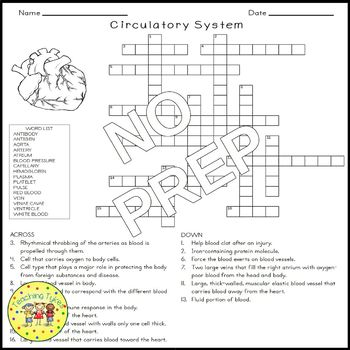 the circulatory system crossword puzzle by teaching tykes. Black Bedroom Furniture Sets. Home Design Ideas