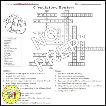The Circulatory System Crossword Puzzle