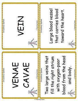 The Circulatory System Vocabulary Cards