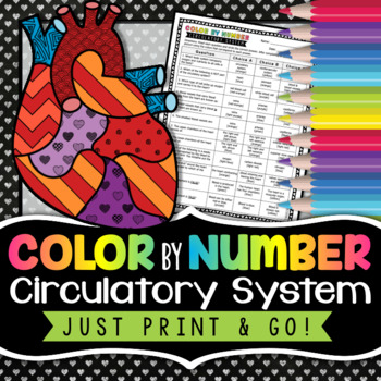 Circulatory System - Color By Number