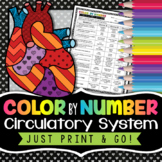 Circulatory System Color by Number - Science Color By Number