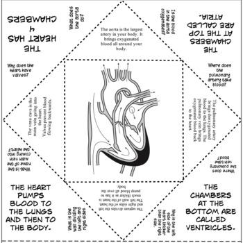 Circulatory System Cootie Catcher