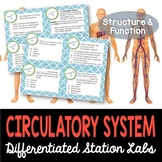 Circulatory System Student-Led Station Lab