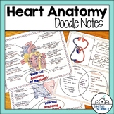 Heart Anatomy Doodle Notes & Diagrams - Distance Learning