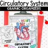 Circulatory Cardiovascular System Sketch Notes Graphic Organizer Review Activity