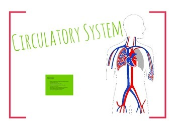 Circulatory System (Grades 6 to 12)