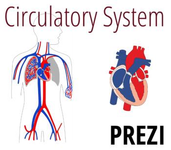 Circulatory System Prezi Circulatory System Prezi
