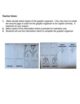 Circulatory System: Graphic Organizer Fold