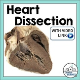 Circulatory System Lab Activity: Sheep Heart Dissection [Distance Learning]