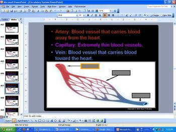 Circulatory and Respiratory System Lesson, Heart and Lungs