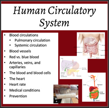 Circulatory System - Biology PowerPoint Lesson, Notes and Activity Package