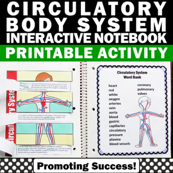 Circulatory System Interactive Notebook Activities for Hum