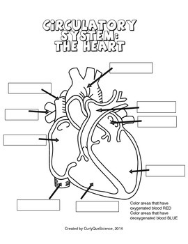 Circulatory System: Label the Heart