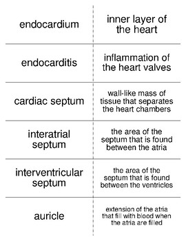 Circulatory System Part I Vocabulary Flash Cards for Anatomy
