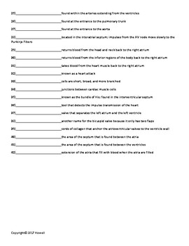 Circulatory System Part I Vocabulary Quiz or Worksheet for Anatomy