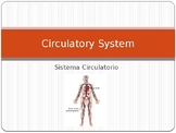 Circulatory System Power Point  With Vocabulary in English