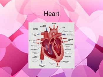 Circulatory System PowerPoint