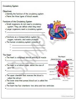 Circulatory System: PowerPoint, Student Guided Notes, Worksheet