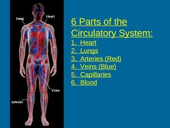 Circulatory System Powerpoint and Guided Notes