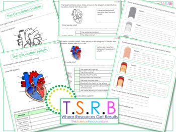 Circulatory System Questions/Worksheet